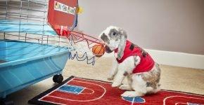 Самый спортивный кролик