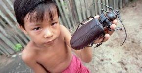 Самый большой пойманный жук