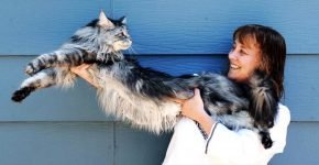Самая длинная кошка
