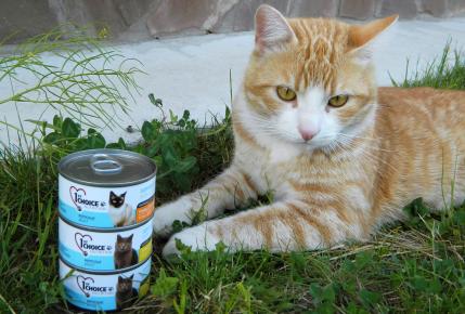 Консервы 1st Choice и кот на траве