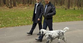 Собака Медведева