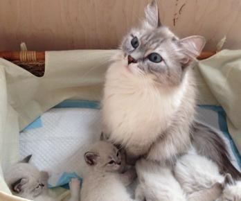 Милка с котятами