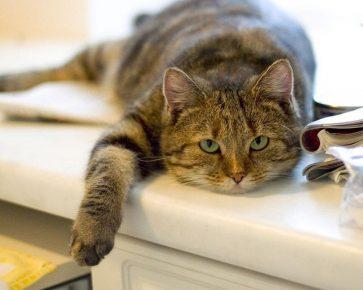 Отсутствие активности у кошки