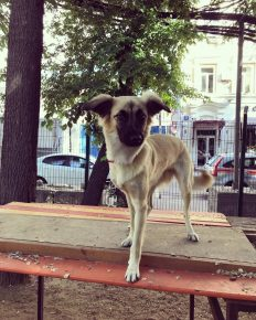 Собака Данилы Козловского
