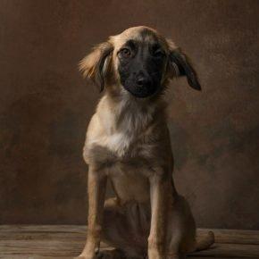 Собака Груша
