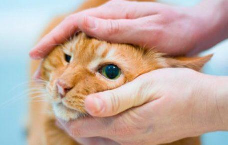 Человек держит кота