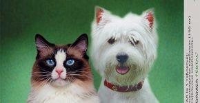 Таблетки от глистов для кошек и собак Фебтал