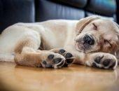 Спящая собака
