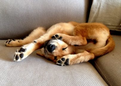 Собака в неудобной позе