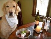 соль пища собака