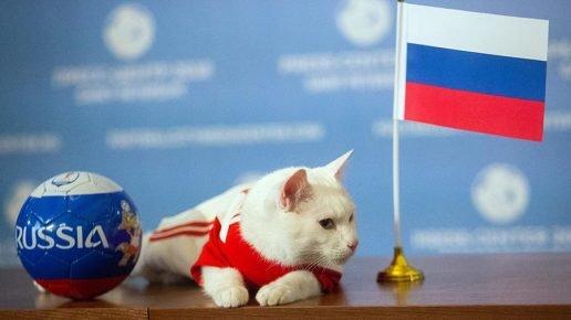 Кот и флаг России