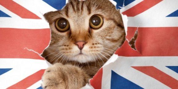 Кот и флаг Англии