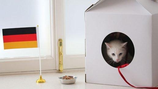 Кот и флаг Германии