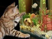 Аквариум и котенок