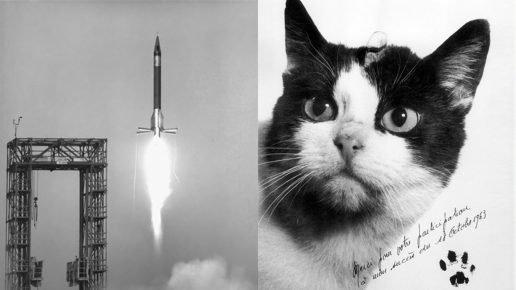 Первый кот в космосе