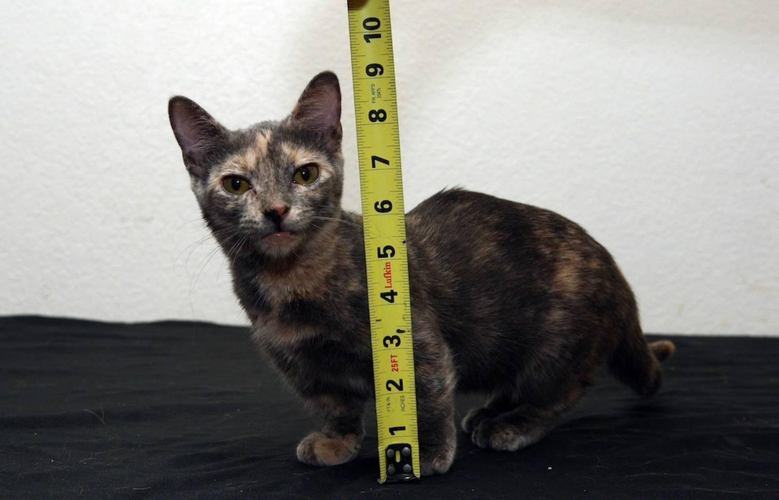 самый маленький кот в мире картинки первой