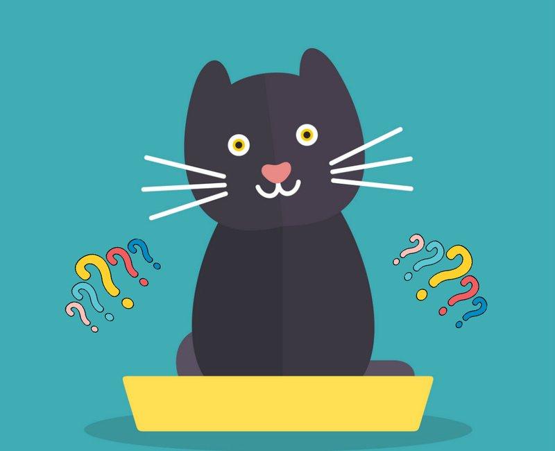 Кот после кастрации не ходит в туалет как помочь коту