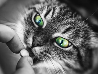 Кошка пьёт лекарство