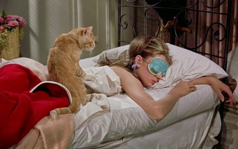 Кот и спящая девушка