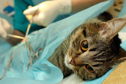 Кот на операционном столе