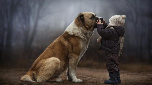 Крупная собака рядом с ребёнком