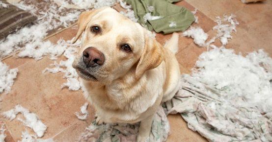 Разрушительное поведение у собак