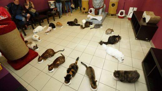 День кота в Эрмитаже