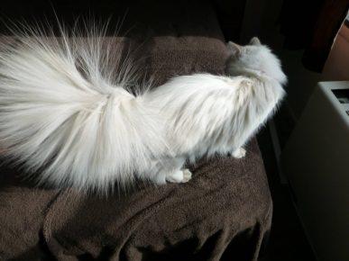 Электризуется шерсть у кошки
