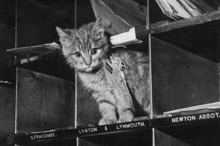 Кот на почте