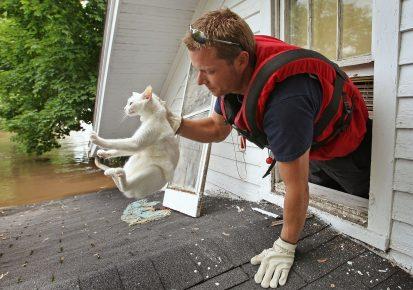Спасение кошки