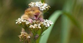 Улыбающаяся мышка
