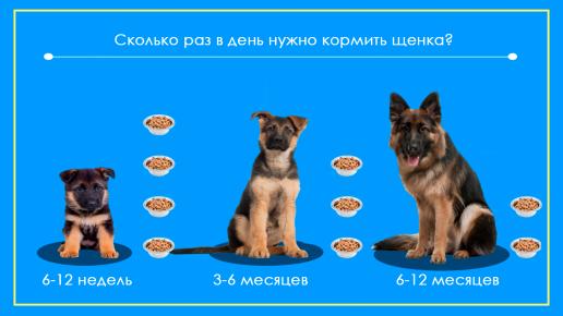 Сколько раз в день кормить щенков