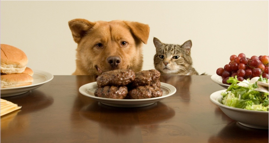 Собака и кот за столом