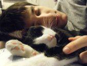 Сон с котом