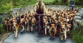 Много собак и велосипедисты