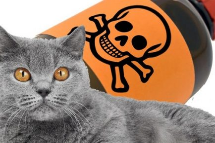 Кот и яд