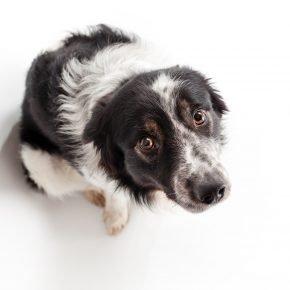 Собака с виноватым видом