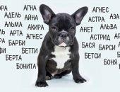 Имена для собаки