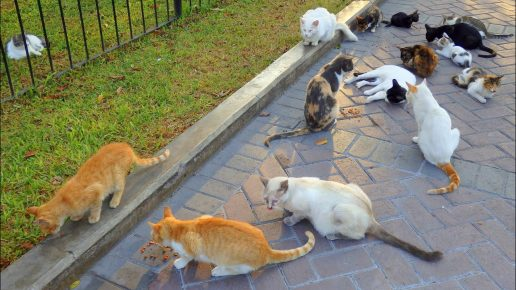 Кошки в парке Лимы