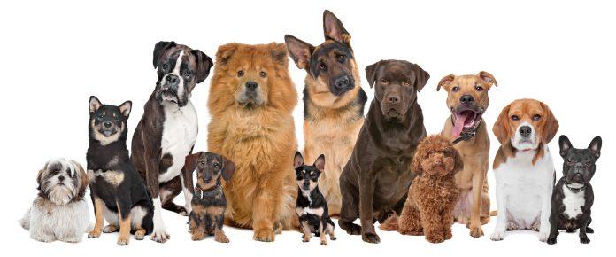 Разные породы собак