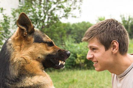 Собака и человек смотрят друг на друга