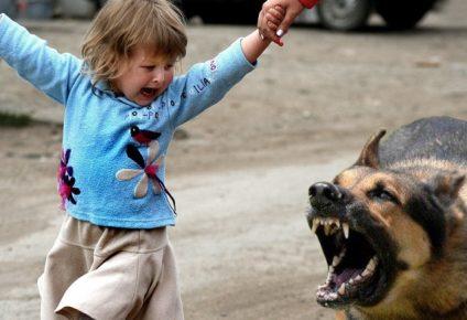 Собака нападает на ребёнка