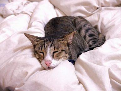 Кошка на одеяле