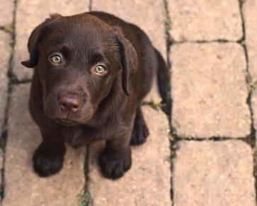 Глаза щенка