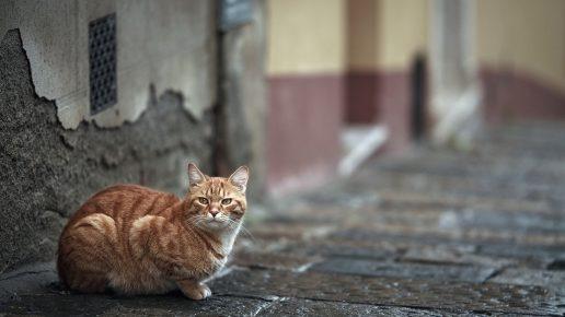 Кошка на каменной мостовой