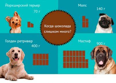 Смертельная доза шоколада для различных пород собак
