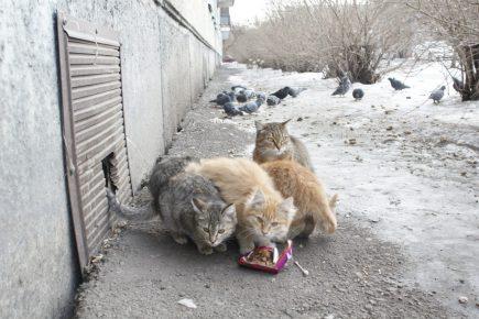 Бродячие кошки