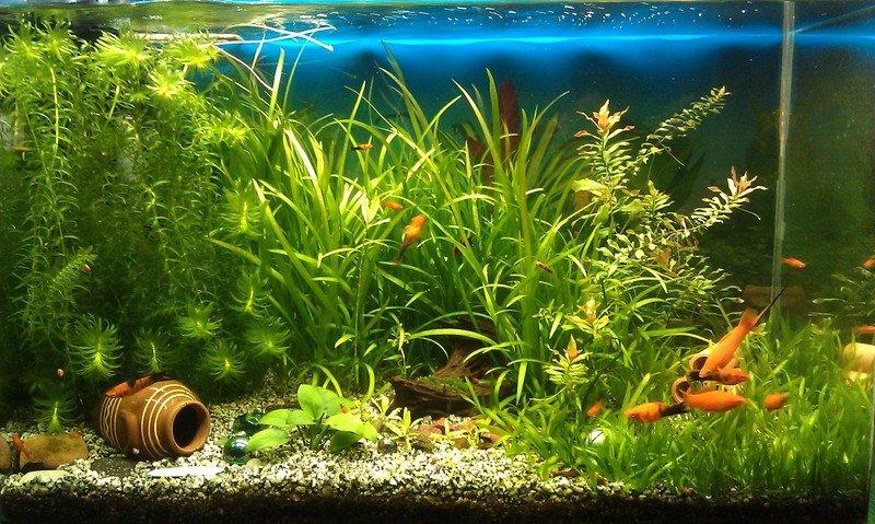 Самые неприхотливые в уходе и красивые аквариумные рыбки