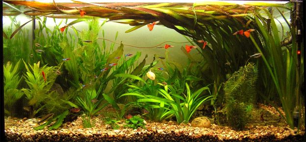 Аквариум с растениями и рыбками