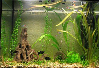 Аквариум после прореживания растений
